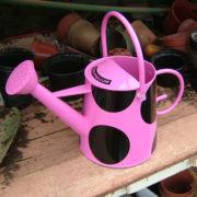pink_wc_rose