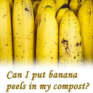 Can I put banana peels in my compost?