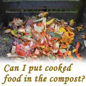 Can I put cooked food in the compost?