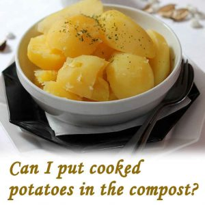Can I put cooked potatoes in the compost?_link
