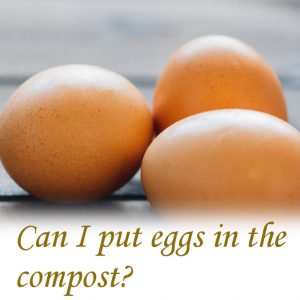 Can I put eggs in the compost?