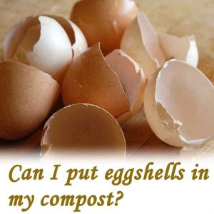 Can I put eggshells in my compost?