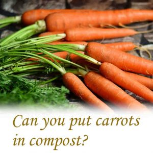 Can you put carrots in compost?