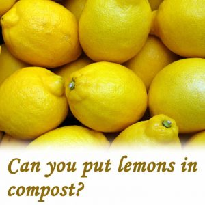 Can you put lemons in compost?