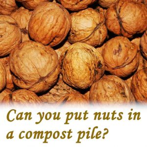 Can you put nuts in a compost pile?