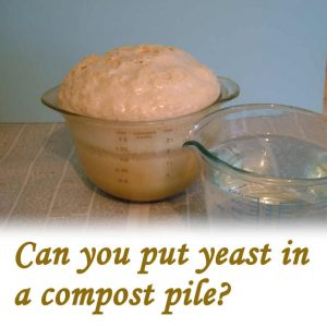 Can you put yeast in a compost pile?