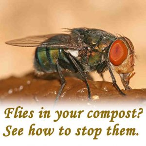 Compost flies
