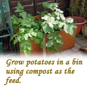 Grow potatoes in a bin.