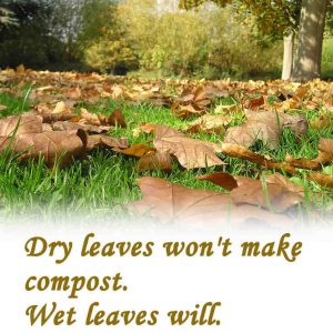 How do leaves decompose faster?