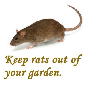 How to deter rats from garden