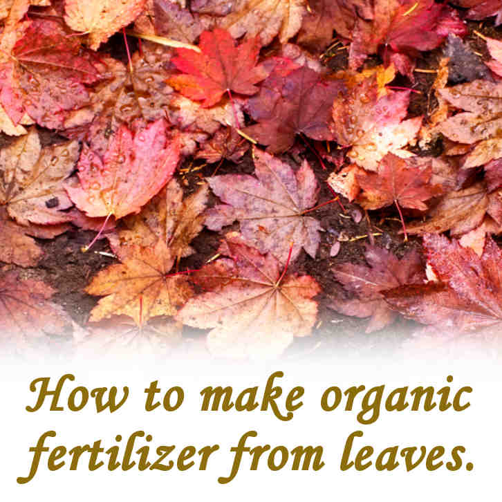 How to make organic fertilizer from leaves