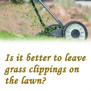 Is it better to leave grass clippings on the lawn?
