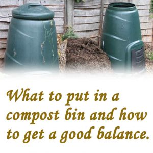 What can you put in your compost bin?