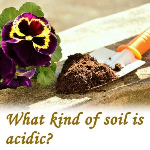 What kind of soil is acidic?