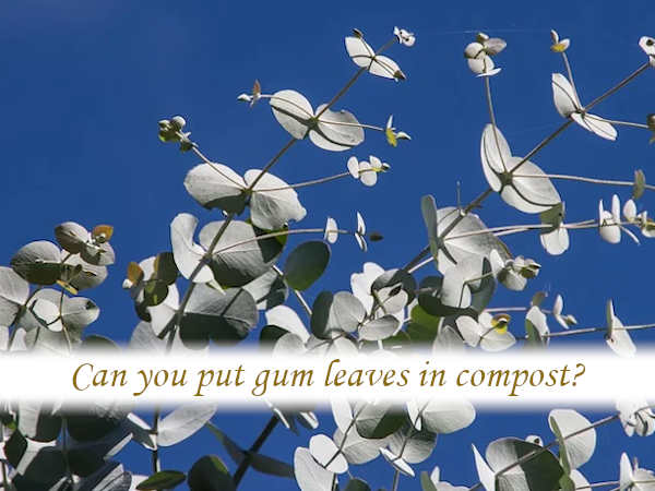 Can you put gum leaves in compost?