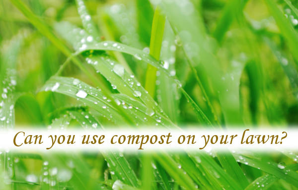 Can you use compost on your lawn?