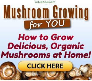 Learn how to grow mushrooms