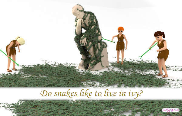 Do snakes like to live in ivy?