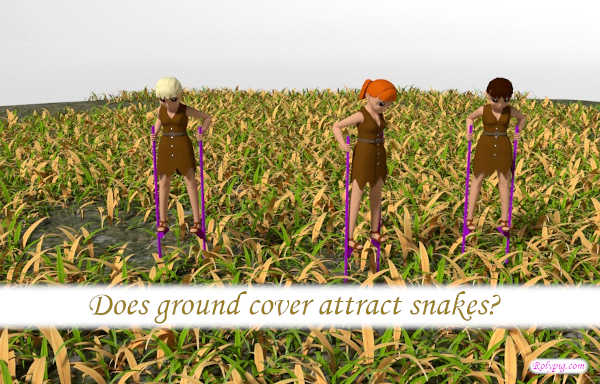 Does ground cover attract snakes?