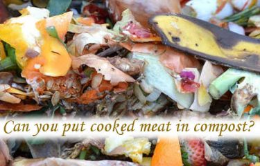 Can you put cooked meat in compost?