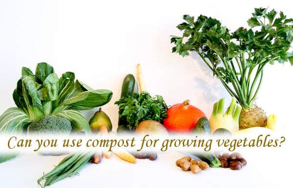 Can you use compost for growing vegetables?