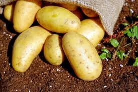 Can you use compost for growing vegetables4