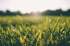 Can you use compost to grow grass?