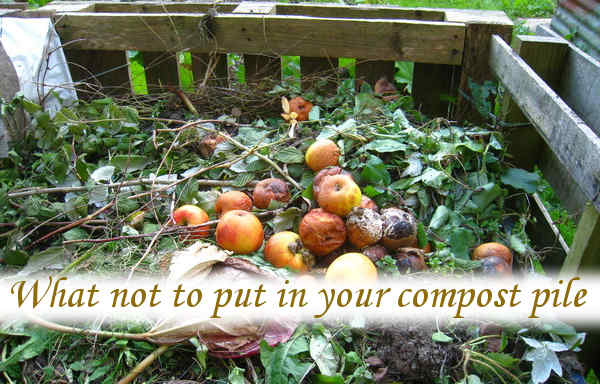 What not to put in your compost pile