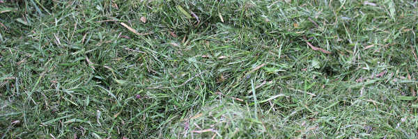 Can you put grass clippings in compost?