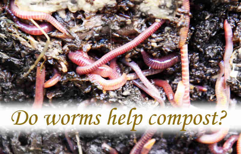 Do worms help compost?