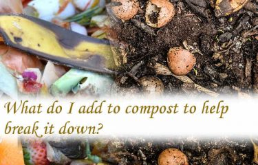 What do I add to compost to help break it down?