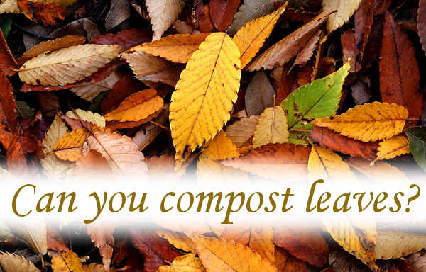 Can you compost leaves?