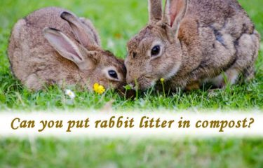 Can you put rabbit litter in compost?