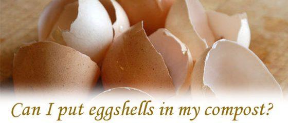 Can I put eggshells in my compost?