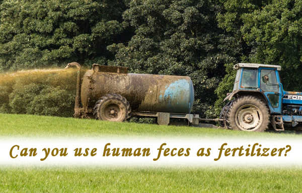 Can you use human feces as fertilizer?