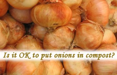 Is it OK to put onions in compost?