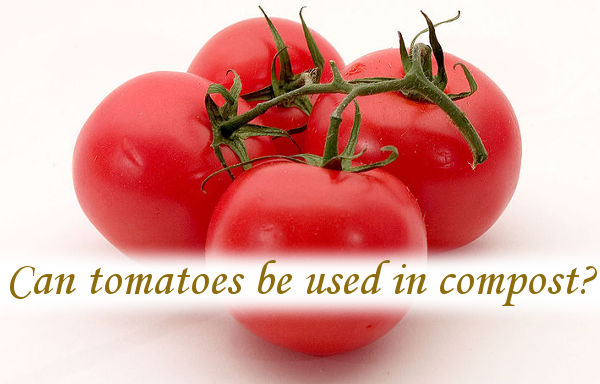 Can tomatoes be used in compost?