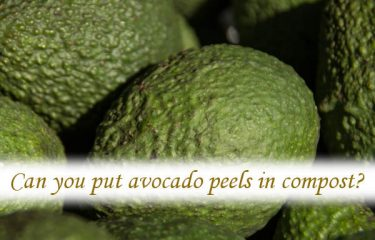 Can you put avocado peels in compost?