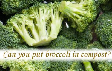 Can you put broccoli in compost?