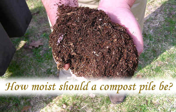 How moist should a compost pile be?