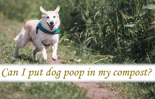 Can I put dog poop in my compost?