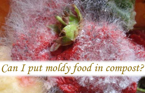 Can I put moldy food in compost?