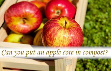 Can you put an apple core in compost?