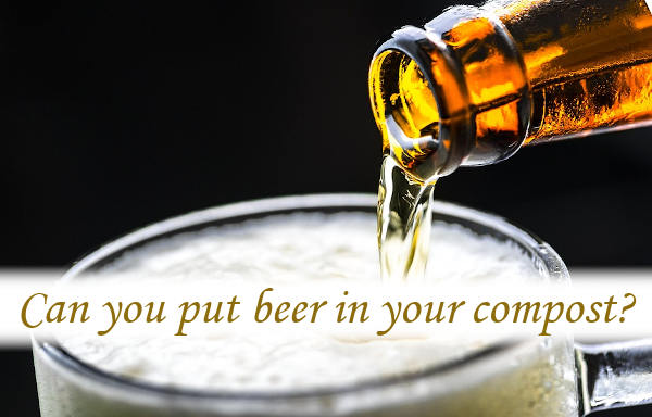 Can you put beer in your compost?
