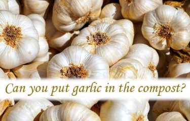 Can you put garlic in the compost?