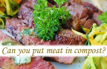 Can you put meat in compost?