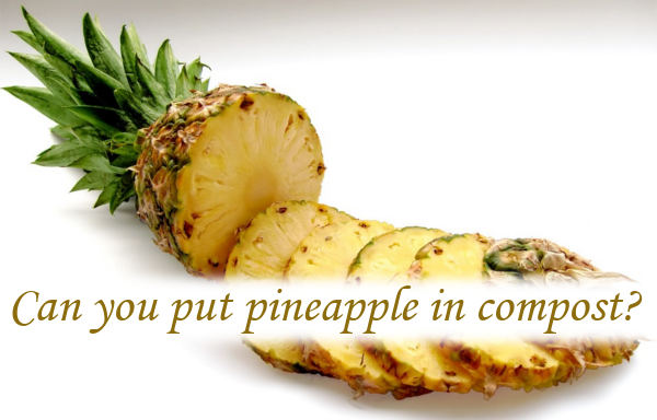 Can you put pineapple in compost?