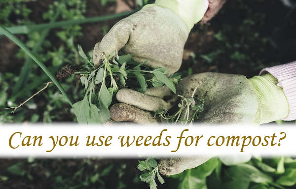 Can you use weeds for compost?
