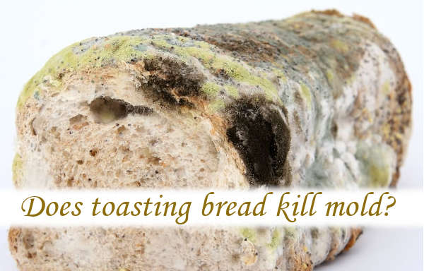 Does toasting bread kill mold?