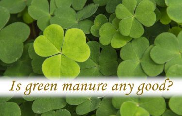 Is green manure any good?